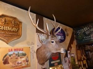 鹿のはく製壁固定
